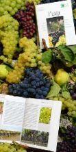 La Festa dell'uva 2016 - Un'antica festa contadina