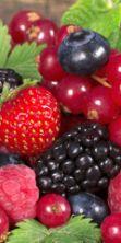 Sagra del mirtillo e frutti di bosco - La frazione di Papiano in festa