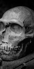 Terni Horror Fest, Festival di Cinema e Letteratura