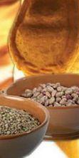 Leguminaria, i piatti poveri della cucina marchigiana