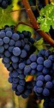 Festa della beata vergine del Rosario e Sagra dell'uva a Priora 2016