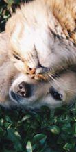 Oktober Pets a Le Gru: l'evento dedicato ai nostri amici
