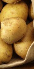 Mostra Mercato Regionale della patata 2016