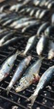Sagra del Misultin 2016, per buongustai che amano il pesce