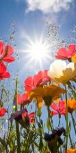 Festa di Primavera a Saonara