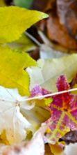 Piccola fiera d'autunno