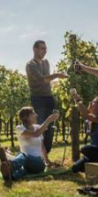 Cantine aperte in Puglia. L'edizione 2016 tra le vigne