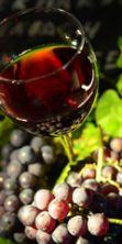 Rubino: rotte del vino a Scicli