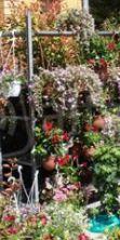 Cattolica in fiore ed Expo dei Sapori 2016