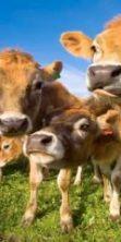 Fiera della Zootecnica a Rustega di Camposampiero