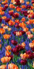 Giardini del Volturno, mostra mercato di piante e fiori
