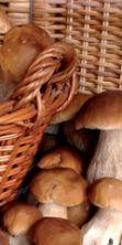Funghi Fest: a Castelbuono torna la sagra dei funghi