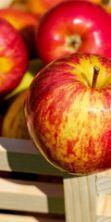 Sagra della mela a Ussassai