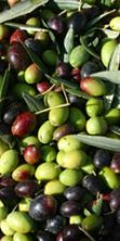 Sagra dell'olio e delle olive