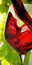 Vinopoli - La Città del Vino & Street Food