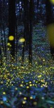 La Lusiroeula, la magia delle lucciole al Parco delle Cave