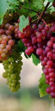 Festa dell'uva e dell'agricoltura bergamasca 2015