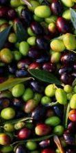 Sagra delle olive 2016