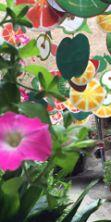 Fiori alle finestre e cene in cantina: Vetralla in fiore