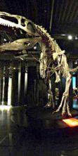 Dinosauri, la mostra diventa un viaggio nella Preistoria