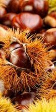 Sagra delle castagne ad Antillo