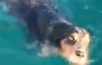 Cagnolino stremato e solo in mare, salvato!