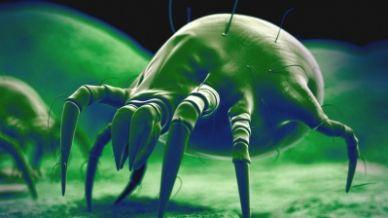 Rimedi naturali contro gli acari, i migliori repellenti per allontanarli