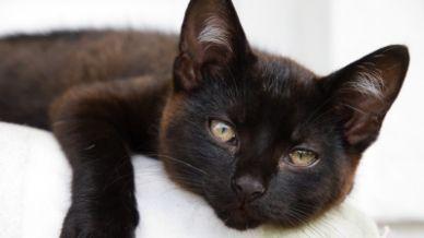 Cosa significa sognare un gatto nero che graffia e morde?