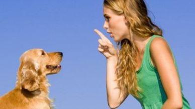 Come si addomestica un cane?