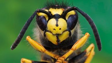 Allarme insetti: è invasione?