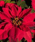 Natale di Luce ad Arcidosso