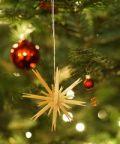 Accensione del tradizionale Albero di Natale