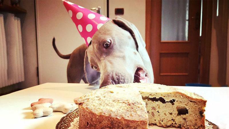 A Brescia la prima pasticceria d'Italia dedicata ai cani
