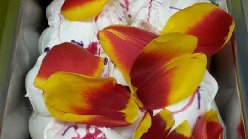 A Milano spopola il gelato al tulipano, ecco come si fa