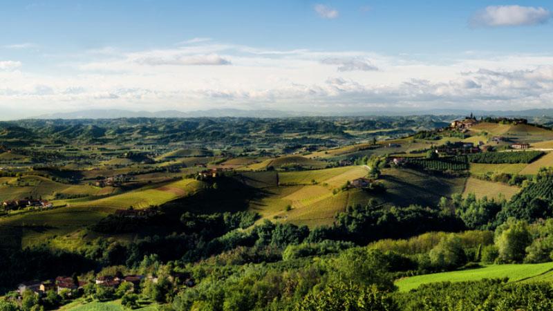 Due milioni di euro per un vitigno, ecco dove è stato venduto