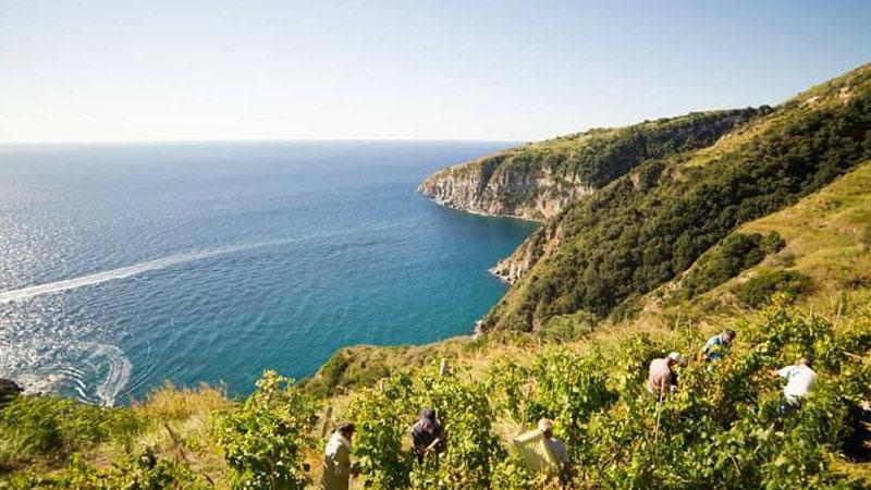 Il vino bianco più buono d'Italia è fatto sull'isola d'Ischia
