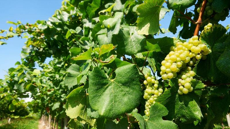 In Franciacorta la palestra tra le vigne
