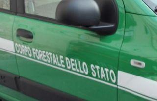 Vivaio Forestale Abruzzo : Arresti per ricostruzione in abruzzo civitella casanova