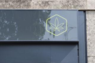 Vivaio Forestale Curno : Apre primo store vendita talee cannabis curno