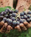 La Festa del vino e del Monferrato - 56^ Edizione