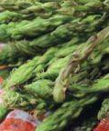 Festa dell'Asparago Selvatico: mercato degli agricoltori, hobbisti, degustazioni
