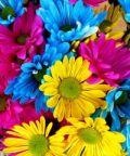 Mostra sui fiori appenninci