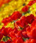 Le invasioni botaniche: fiori, orti e affini in centro città