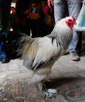 La Fiera del Primo Maggio: festa nell'antico borgo