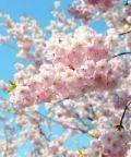 Assaggi di Primavera, un saluto alla bella stagione