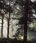 Pomeriggi con il ricercatore: a spasso con il forestale
