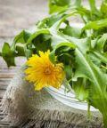 Sagra della cicoria: un gastronomico