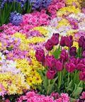 Festa di Primavera: piante, fiori, articoli per il verde e giardinaggio