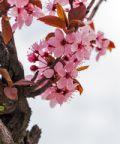 Festa di Primavera a Fontanafredda