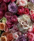 Country Rose, la mostra mercato di rose antiche, inglesi e francesi